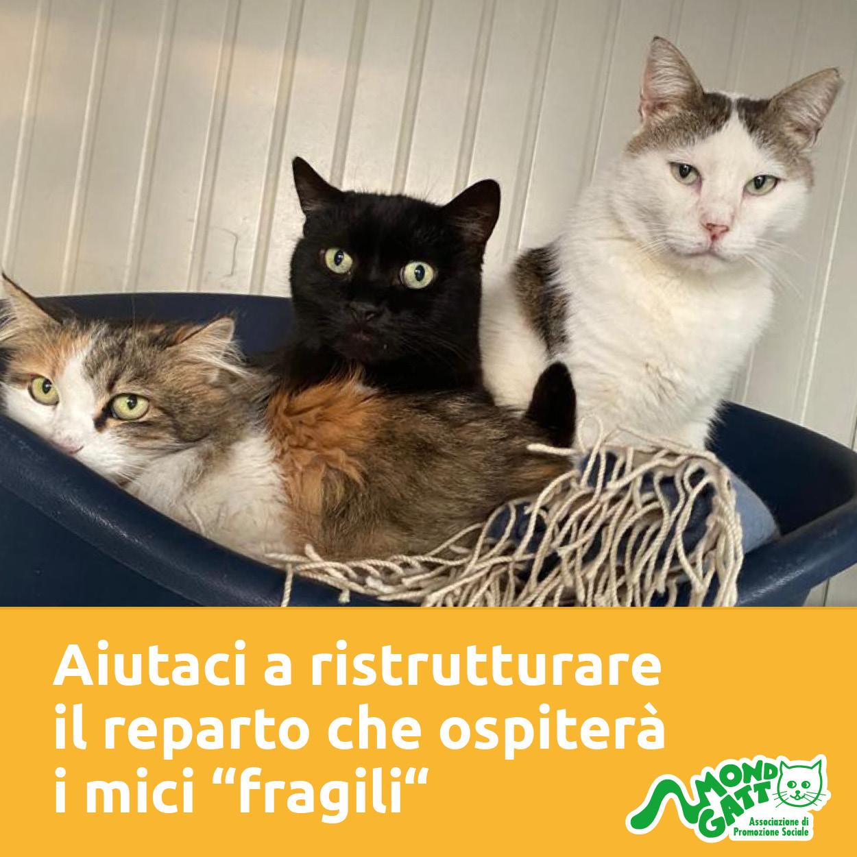 I gatti più fragili sognano un rifugio